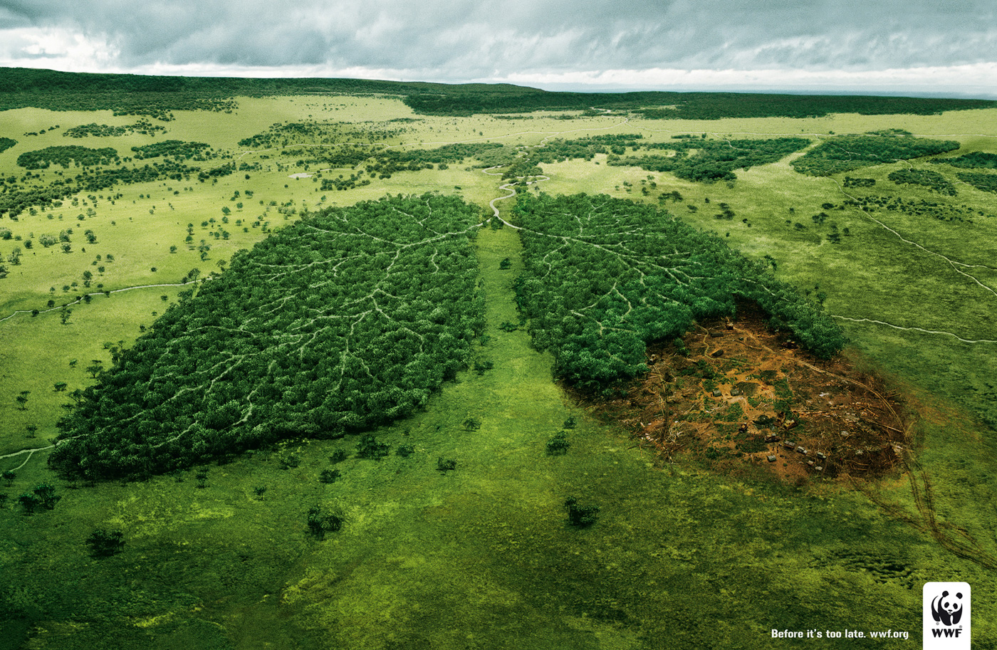 wwf_lungs