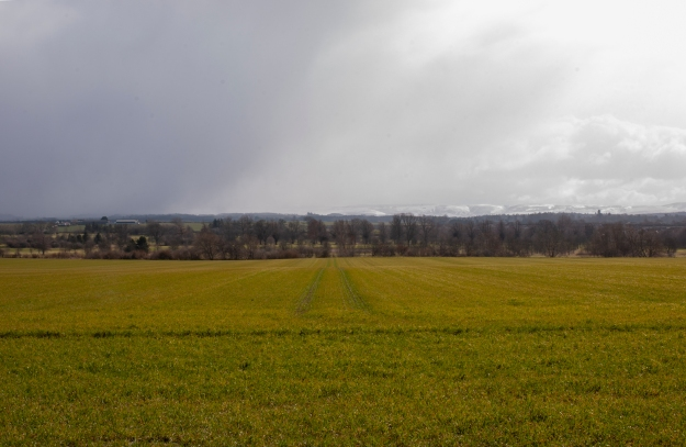 Green field. A field which after being ploughed has been left fallow to grow weeds through the winter period.